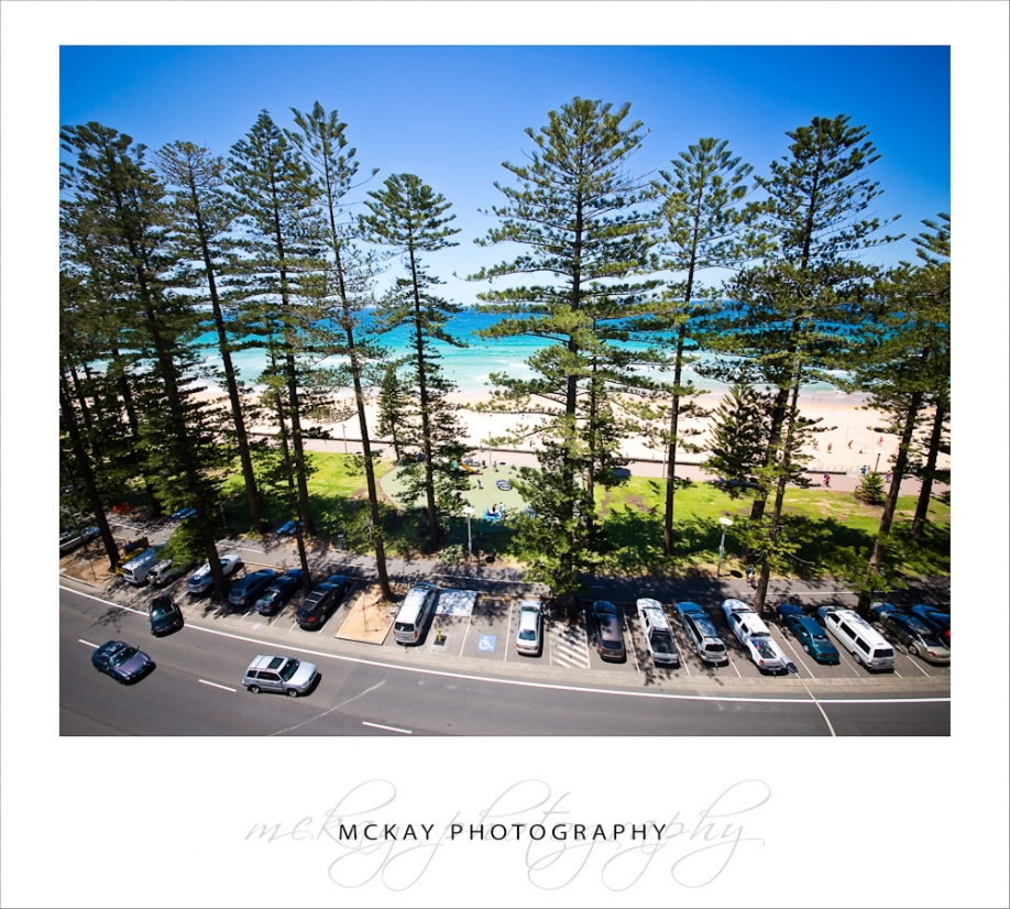 The always awesome Manly beach front pine trees