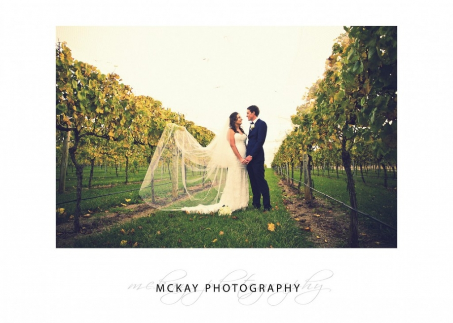 Bendooley Estate wedding vines