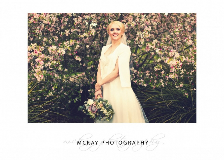 Cherry blossoms wedding photo Spring Bowral