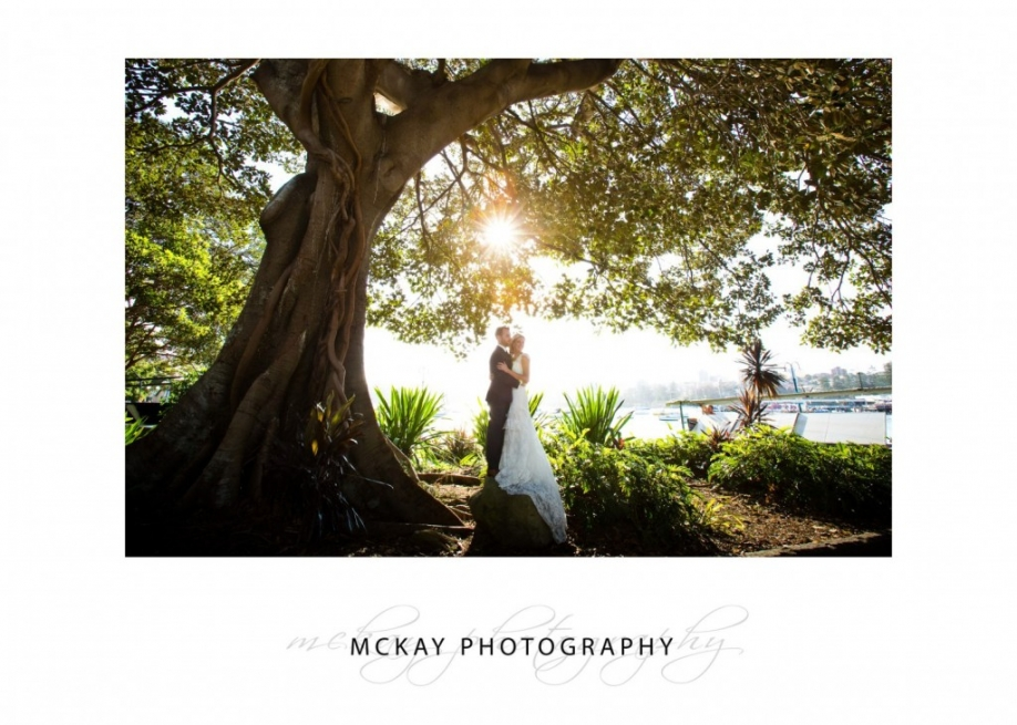 Big fig tree wedding photo Manly