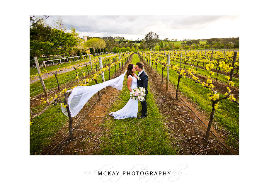 Amongst the grape vines at Centennial Vineyard Bowral
