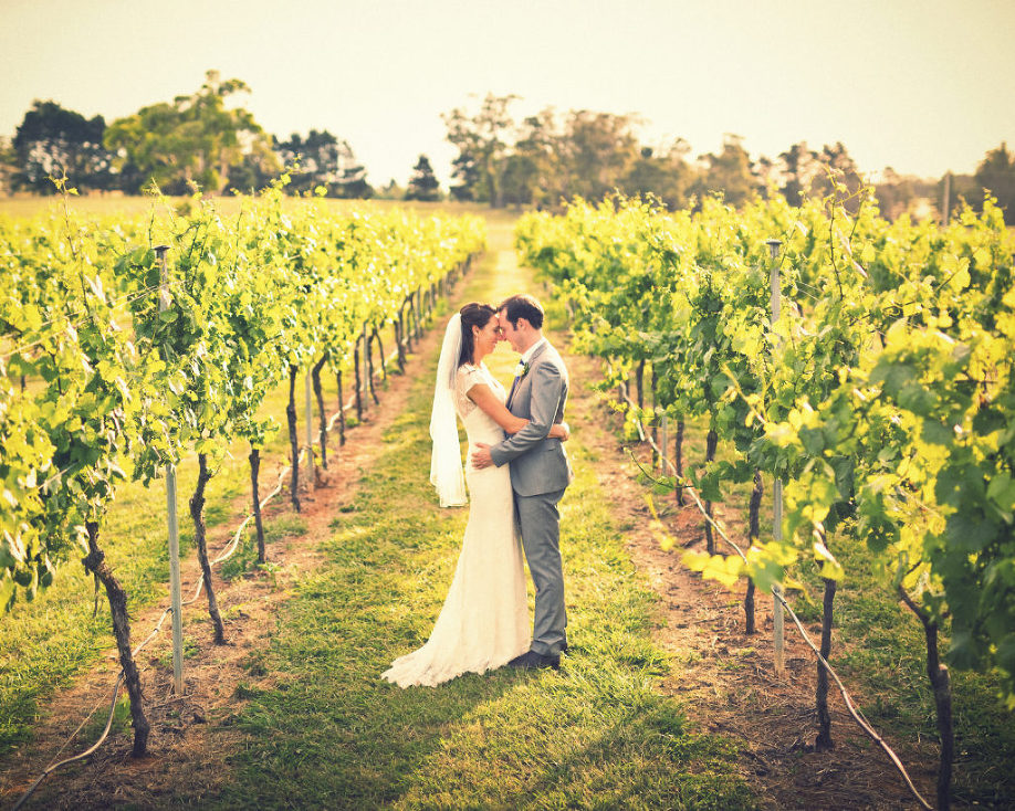 Bendooley Estate wedding photo grape vines