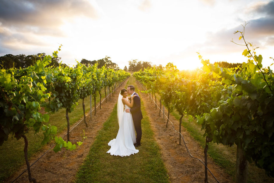 Bendooley Estate wedding sunset photo vines