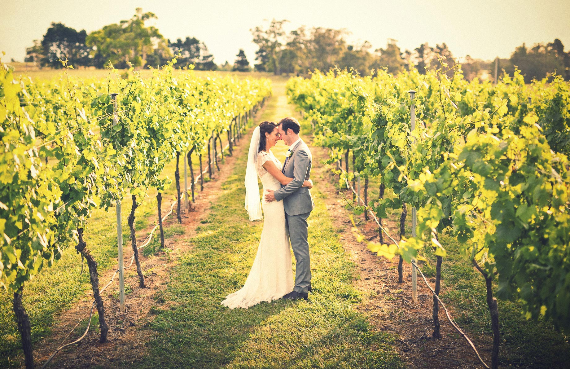 Bendooley Estate wedding grape vines