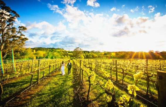 Centennial Vineyards wedding photo sunset grape vines