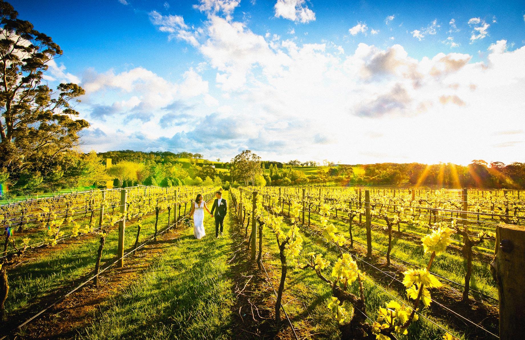 Centennial Vineyards wedding photo sunset grape vines