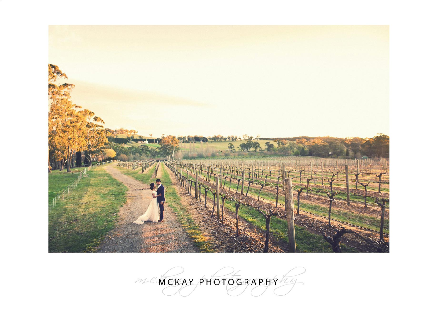 Centennial Vineyards Bowral sunset photo