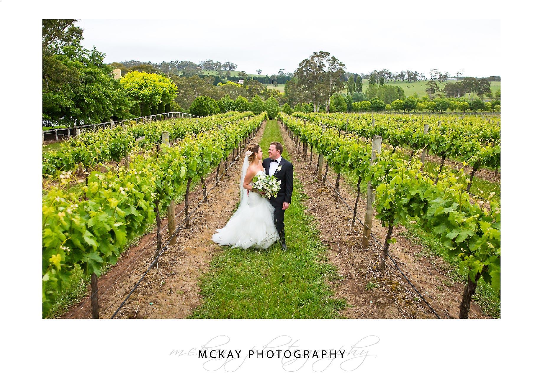 Bride groom in grape vine rows Centennial Vineyards