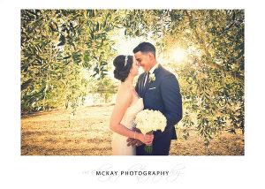 Pialligo Estate wedding photo sunlight through olive trees