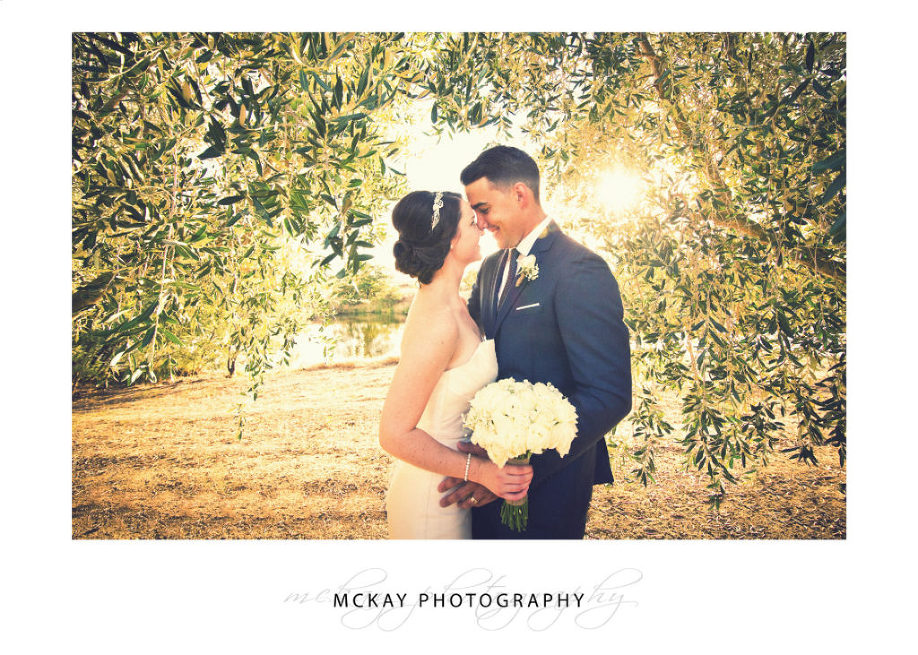 Pialligo Estate wedding photo sunlight through olive trees