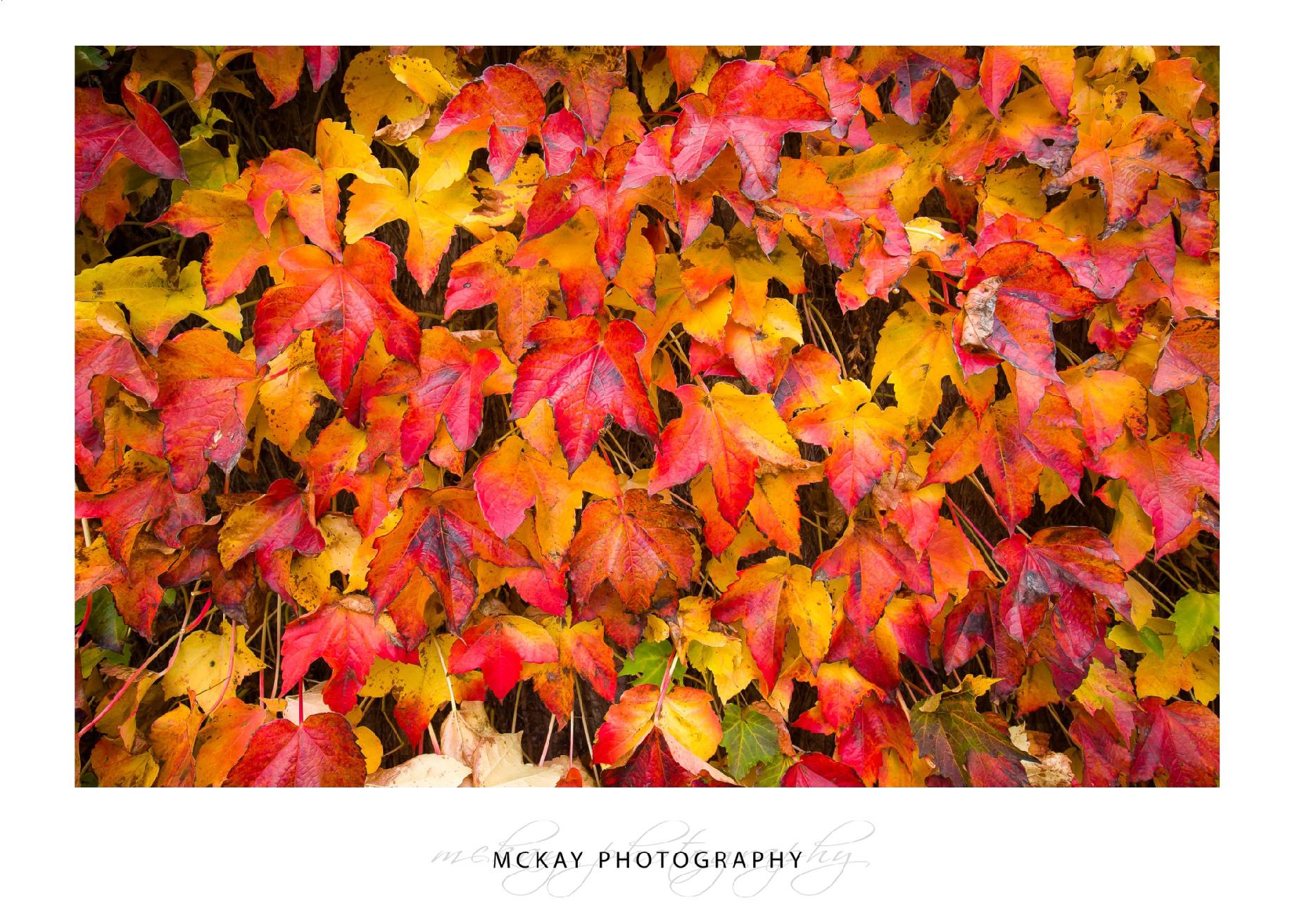 Autumn wedding Bowral Milton Park